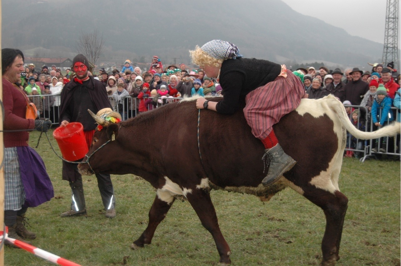 Ochsenrennen in Rottau am Faschingssonntag