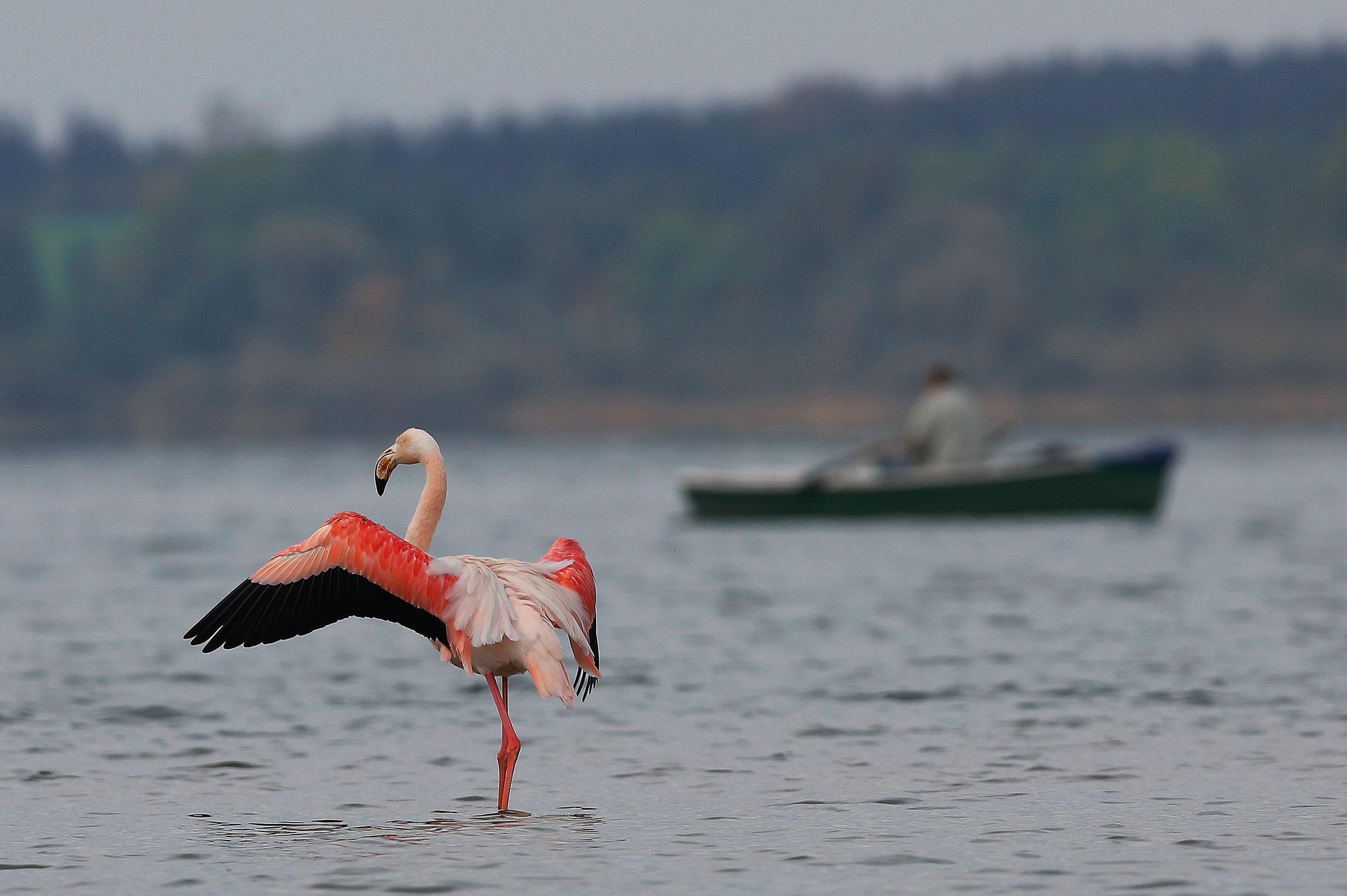 Vogelbeobachtungs-Wanderung und Fotografie