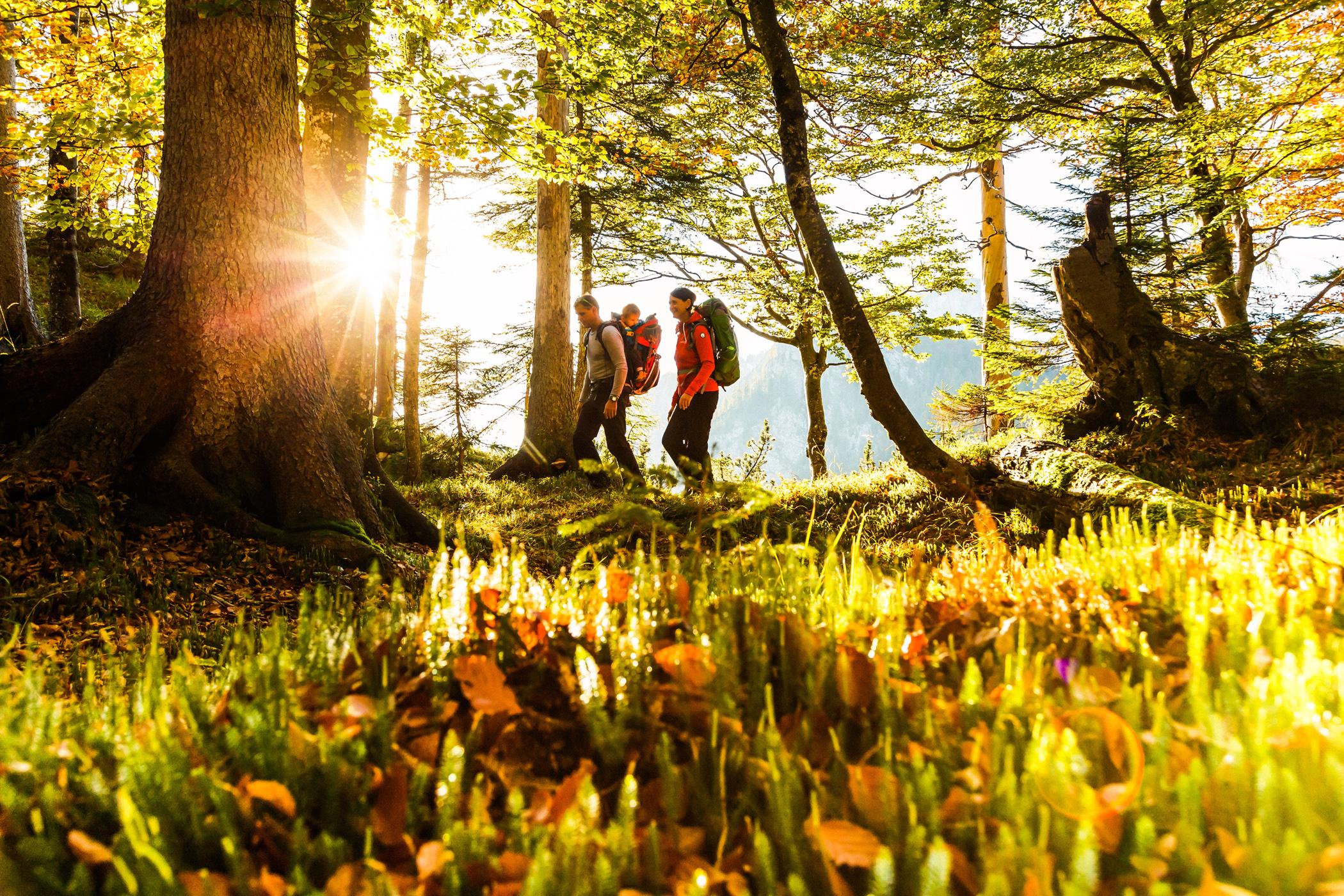 Almwanderung - Auf den Spuren der Holzknechte