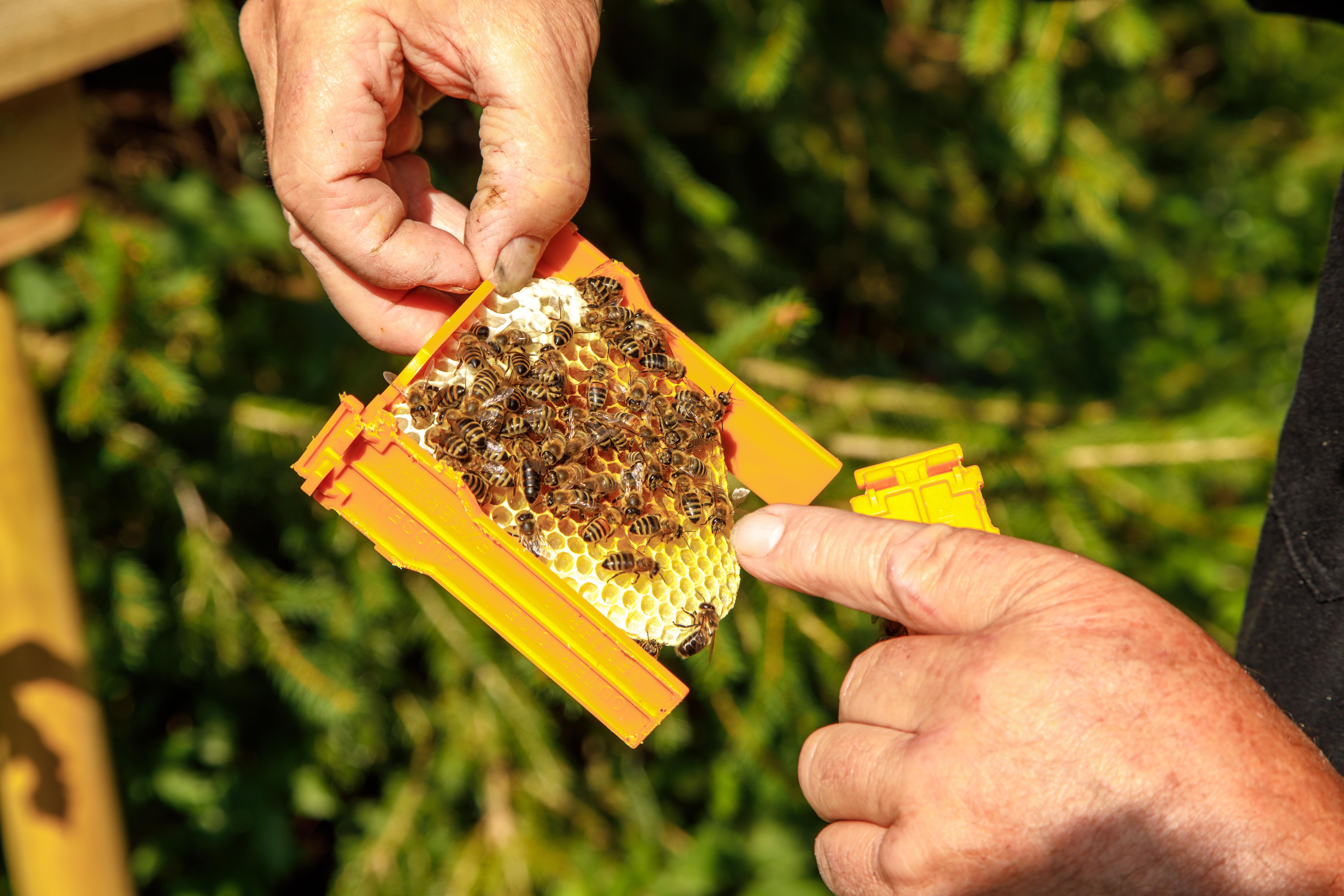 """Imkerwanderung - """"Von der Blüte zum Honig"""""""