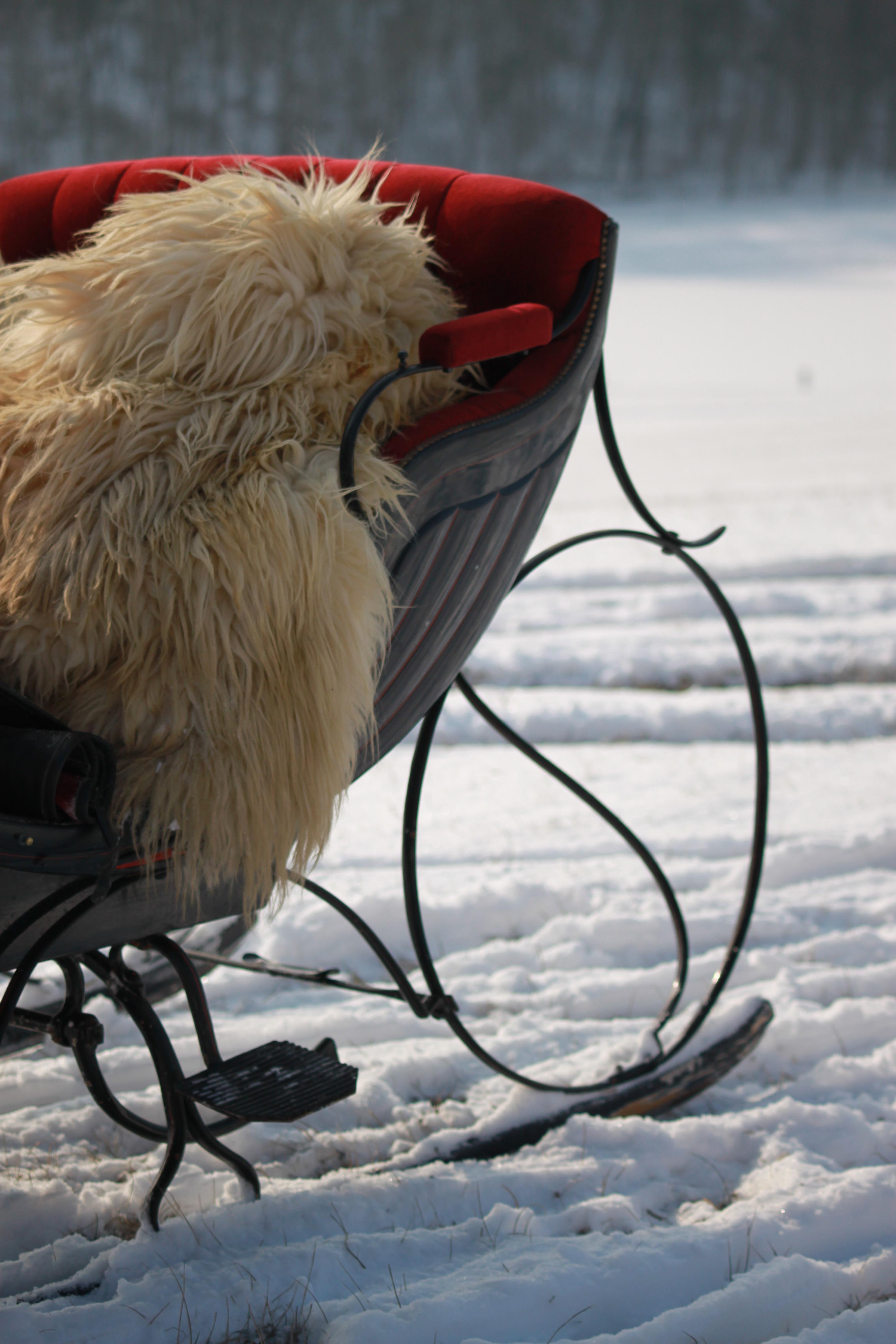 Pferdeschlittenfahrt zum Biathlonzentrum