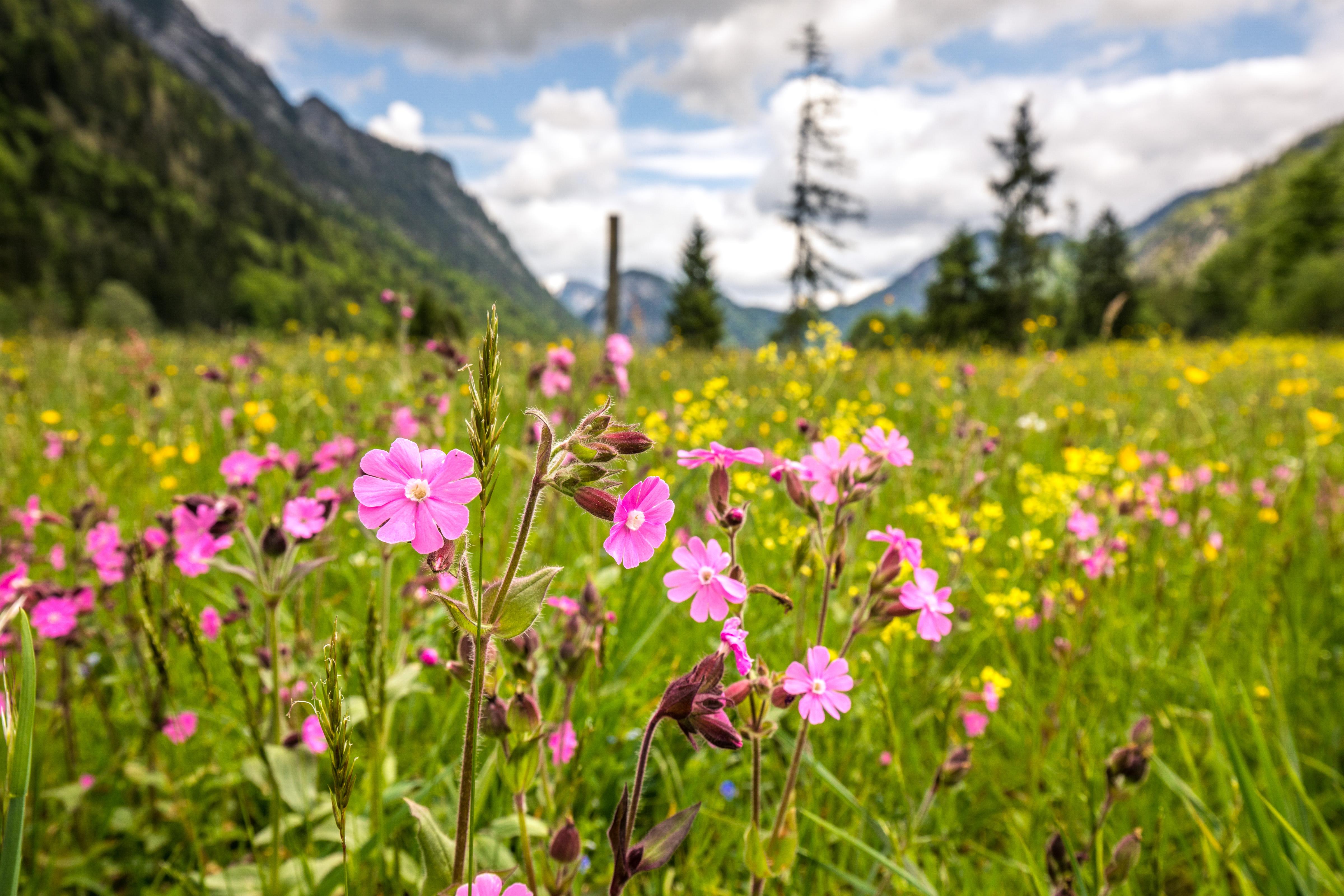 Bergblumenwanderung auf dem Rauschberg
