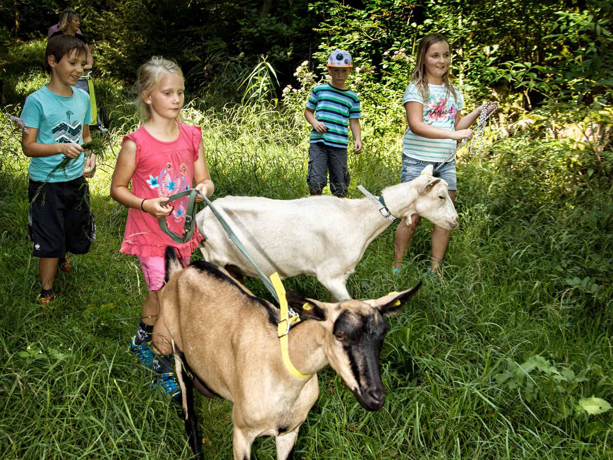 ABGESAGT! Wandern mit Ziegen